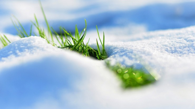 Snow Macro Grass Winter Hd Background Nature Wallpapers